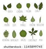 vector set of colored green... | Shutterstock .eps vector #1145899745