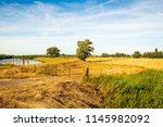 green reed plants and a rusty... | Shutterstock . vector #1145982092