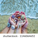 seashells and sand  seashells... | Shutterstock . vector #1146064652