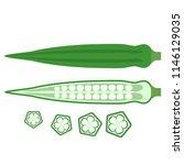 bamiya or okra edible eastern... | Shutterstock . vector #1146129035