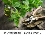 nettle twigs  healthy infusion... | Shutterstock . vector #1146149042