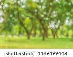 abstract blurred of green trees ... | Shutterstock . vector #1146169448