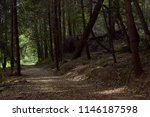 Stock photo deep forest and mountains along california s bigfoot scenic highway 1146187598