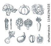 farm fresh vegetables set.... | Shutterstock .eps vector #1146196535