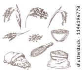 Rice Cereal Spikelets  Grain I...