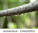 close up view on tree branch... | Shutterstock . vector #1146263012