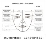 woman face scheme demonstrating ... | Shutterstock .eps vector #1146404582