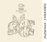 taro  taro root  leaves and... | Shutterstock .eps vector #1146410852