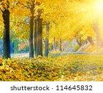 Autumn Maple Trees In Autumn...