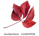 Autumn Red Leaf  Isolated On...