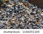dainty sea shells washed up on... | Shutterstock . vector #1146551105