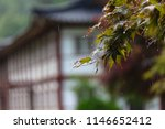 the sorrow of a rainy day | Shutterstock . vector #1146652412