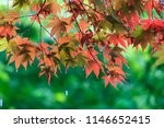 the sorrow of a rainy day | Shutterstock . vector #1146652415