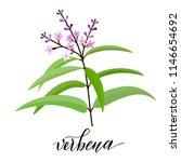 Vebena Flower In Flat Style....