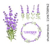 set of lavender flowers... | Shutterstock .eps vector #1146708962