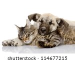 Stock photo the dog lies on a cat isolated on white background 114677215