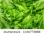 lettuce leaves a symbol of... | Shutterstock . vector #1146773888