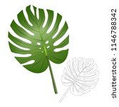 philodendron monstera leaf... | Shutterstock .eps vector #1146788342