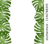 philodendron monstera leaf... | Shutterstock .eps vector #1146788345
