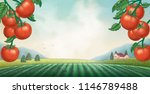 tomato orchard background with... | Shutterstock .eps vector #1146789488