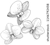 orchid flower in a vector style ... | Shutterstock .eps vector #1146792458