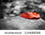 Red Leaf On Black And White...