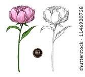 set of peony flowers  leaves ... | Shutterstock .eps vector #1146920738