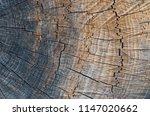 macro photography of wood...   Shutterstock . vector #1147020662