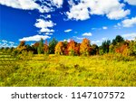 autumn nature forest trees... | Shutterstock . vector #1147107572