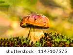 mushroom in autumn forest scene.... | Shutterstock . vector #1147107575