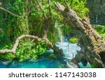 the tilted withered tree above... | Shutterstock . vector #1147143038