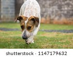 dog in its habitat | Shutterstock . vector #1147179632