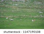 horses on the grass | Shutterstock . vector #1147190108