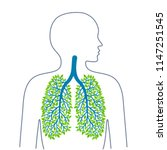 human lungs. healthy clean... | Shutterstock .eps vector #1147251545