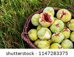 Close Up Fresh Green Figs With...