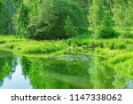 trees by the river at summer... | Shutterstock . vector #1147338062