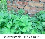 wall of red brick. green grass. ... | Shutterstock . vector #1147510142