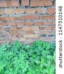 wall of red brick. green grass. ... | Shutterstock . vector #1147510148