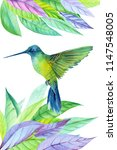 card with colibri and colored... | Shutterstock . vector #1147548005