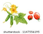 watercolor ripe red tomatoes  ... | Shutterstock . vector #1147556195