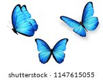 Stock photo three blue butterflies isolated on white background 1147615055