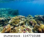 a colorful landscape of fish... | Shutterstock . vector #1147710188