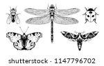 insects  aglais io  european... | Shutterstock .eps vector #1147796702