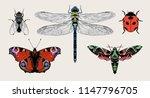 insects  aglais io  european... | Shutterstock .eps vector #1147796705