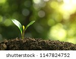 small trees are growing on the... | Shutterstock . vector #1147824752