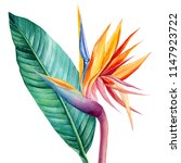 tropical bright flowers and... | Shutterstock . vector #1147923722