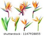 set of tropical plants flowers... | Shutterstock . vector #1147928855