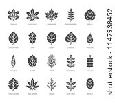 autumn leaves flat glyph icons. ... | Shutterstock .eps vector #1147938452