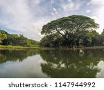tree and lake landscape... | Shutterstock . vector #1147944992