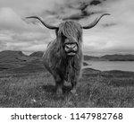 a very curious highland cow met ... | Shutterstock . vector #1147982768